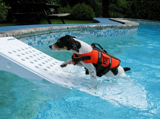 Rampa risalita anti annegamento cani e gatti piscine - Del taglia piscine ...