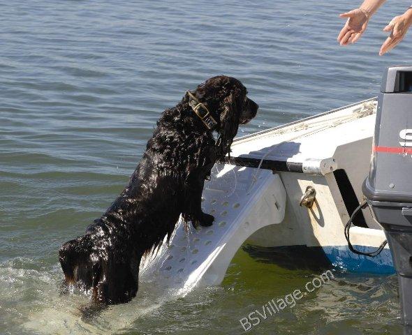 risalita animali domestici sulle imbarcazioni