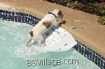 sicurezza del tuo cane in piscina