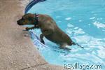 sicurezza animali domestici per piscina